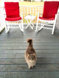 I don't have any photos with the Knipes (whoops) but their cat sure is friendly :)