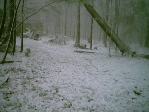 Real snow!  In Pennsylvania.  In late April. (not lying. But this was a while ago)